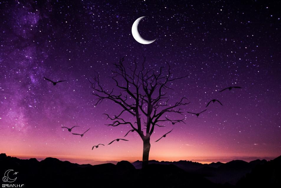😀 Pueden votarme en el desafio de remix de imagen meteoro majestuaso 😀 . .  #freetoedit #silueta #arbol #monte #galaxia #universo #espacio #estrellas #violeta #pajaros #luna #atardecer #amanecer #ircmajesticmeteor