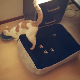 cat drinkingwater lazycat pccats cats
