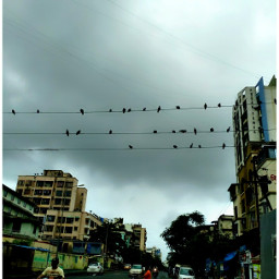 afteralongtime photography mobphotography city doves
