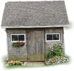 shed yard flowers scenic cuteshed