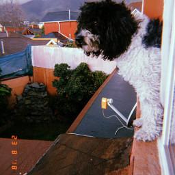 freetoedit perros🐶 perro dog huji