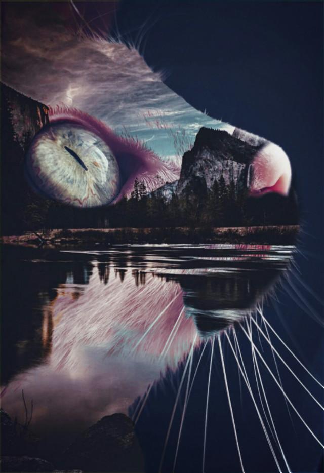 #freetoedit @picsart @freetoedit #cat #animal #nature #creative #inspiration #gato #eyes