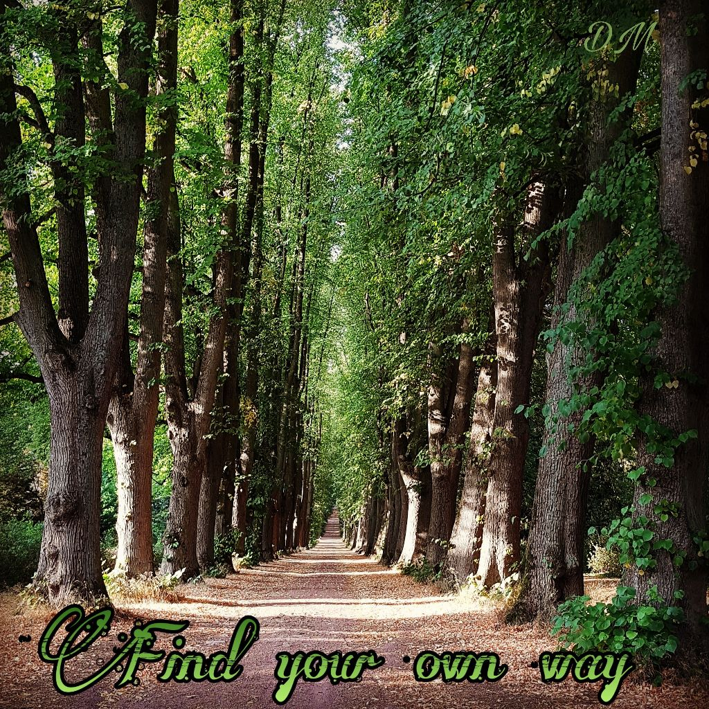 Find Your Own Way Tree Wald Allee Way Nature Forest Te