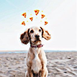 freetoedit dogdayremix stickerchalleng featureme featured ircdogday
