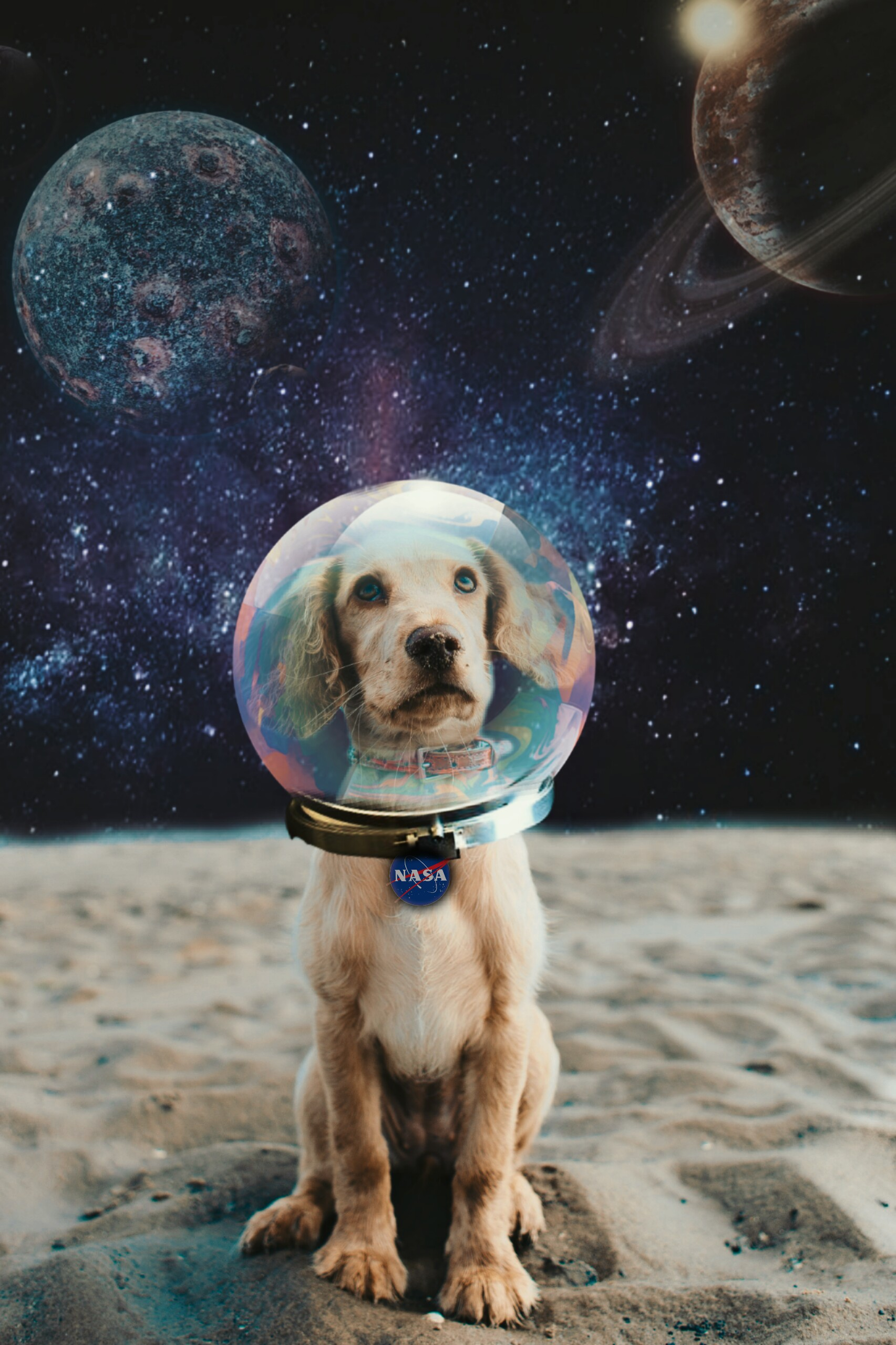 #freetoedit Space 🐕 #edit #picsart #puppy #dog #space #astronaut #magic