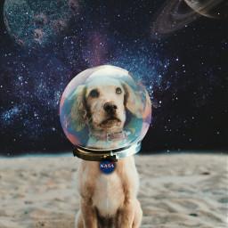 freetoedit edit picsart puppy dog ircdogday