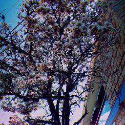 tree auntumn