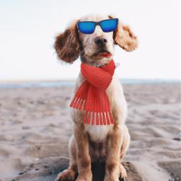 freetoedit dog muffler sunglass ircdogday