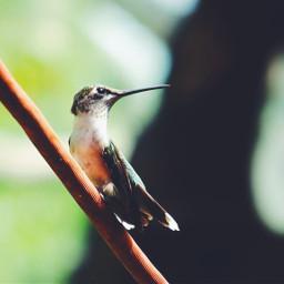 hummingbird bird beautiful animal outdoors pcasingleitem