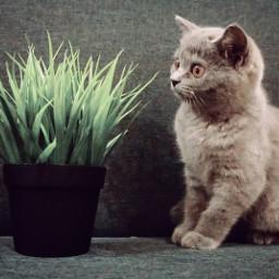 kitten cat kitty