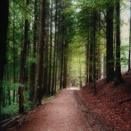 freetoedit road nature woodland dirtroad