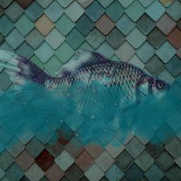 freetoedit fish mystical cloud