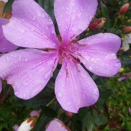 pcflowerpower flowerpower flower flowerphotography myphotography