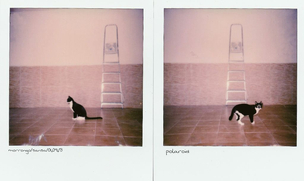 Sansa #mypet #cute #petsandanimals#catsofpicsart #catlover #instantphoto #polaroid #myart #creative