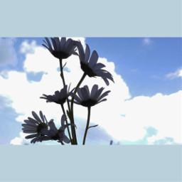 flower pcflowerpower flowerpower
