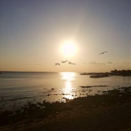 sunset birds freetoedit