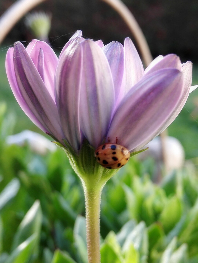 @22sk#freetoedit  #pcflowerpower #flowerpower#sunflower#myphoto#garden