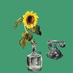 freetoedit sunflower sunflowers sunflowerremix sunflowerfields