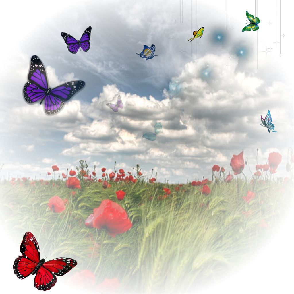 Goodmorning Butterfly Image By Adanreyjimenez29