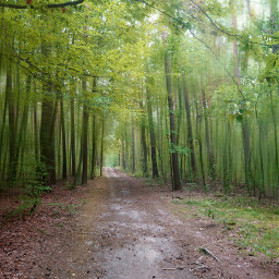 freetoedit nature forestroad photography landscape