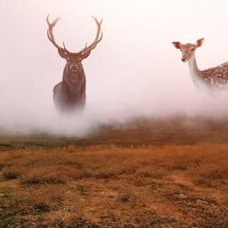 freetoedit deer muskdeer nature field