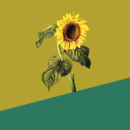 freetoedit sunflower sunflowerremix