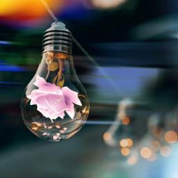 freetoedit light bulb roseflower pink