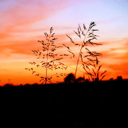 freetoedit remix remixit colorful photography myoriginalphoto nature texassky sunlight goldenhour grasses myphotography sunsetphotography sunset