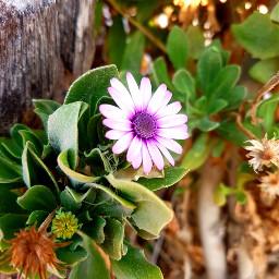 freetoedit flowers colorful