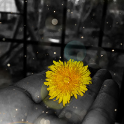 flower blackandwhite likd4like love thankyou