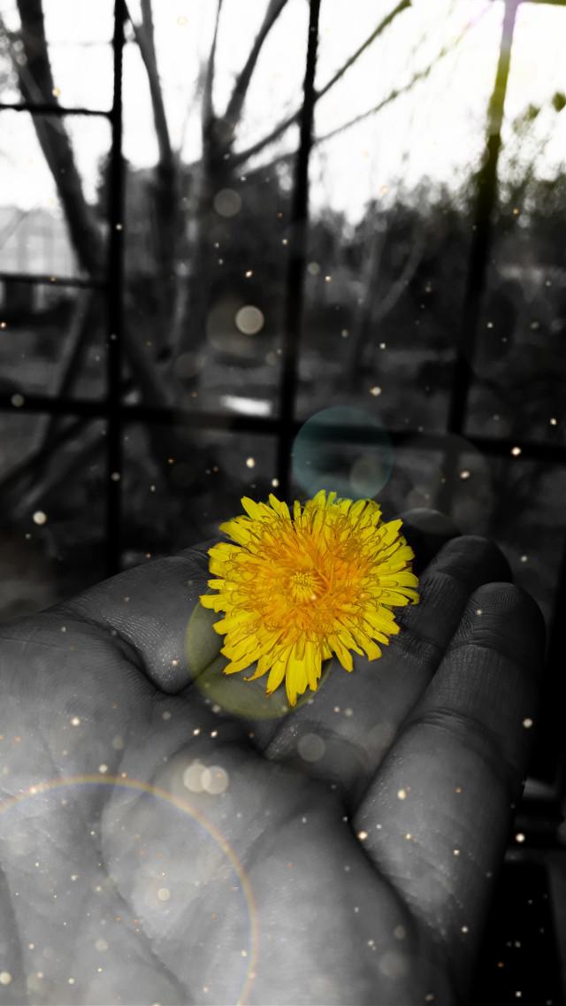 #flower #blackandwhite #likd4like #love #thankyou #fotoedit #flores #naturalezamuerta #flor #happyday #edits #edited