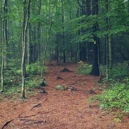 forest trees nature natureaddict roamtheplanet