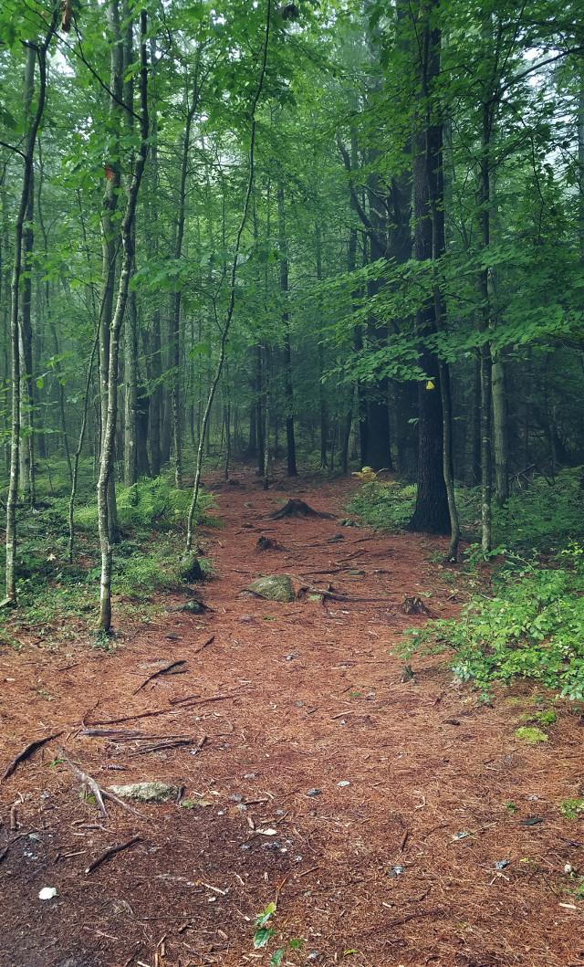 #forest #trees #nature #natureaddict #roamtheplanet #adventure #trails