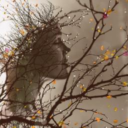 freetoedit fallleavesbrush mothernature tree welcomefall