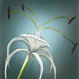 rockel1 drawing painting digitalpainting flower