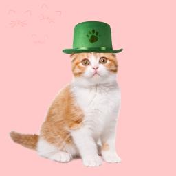freetoedit catlove greencat lovers ircgloriousgreenhat