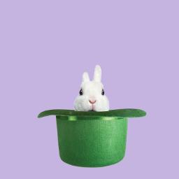 freetoedit simply bunnies bunny bunnylove ircgloriousgreenhat