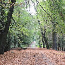 nature autumn forest landscape