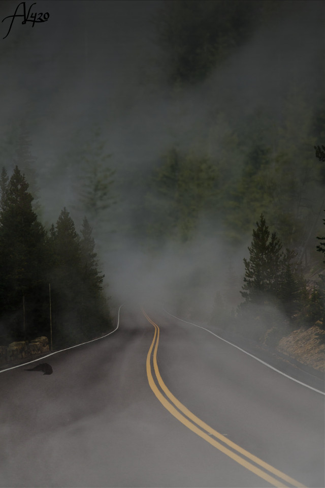 DO SOMETHING COOL WITH THIS! #foggy #deserted #road #street #trees  #freetoedit #remixme #remixit