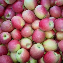 freetoedit fruits nature myphoto