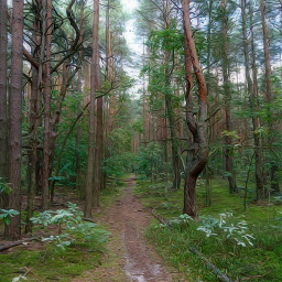 nature woodland road forest forestroad freetoedit
