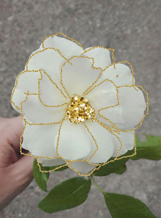 #freetoedit #flower #garden #light #creative