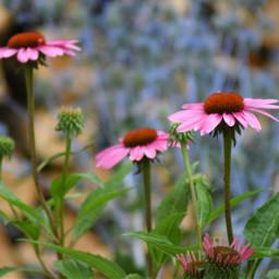 freetoedit nikond5300 purple unedited photography
