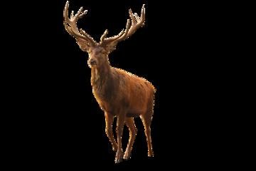 ftestickers deer buck antlers freetoedit
