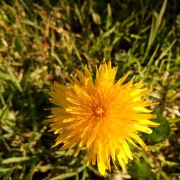 freetoedit flor