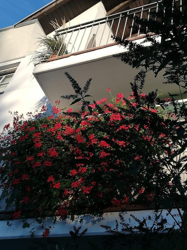 #freetoedit #summerend#myphoto #balcony #september2018