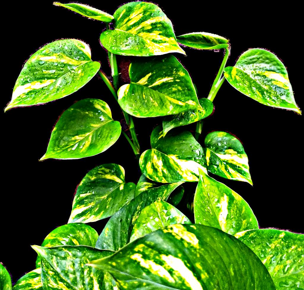 #plant #plantsarefriends #green #gogreen #fresh #picsart #hdr #myphotography @picsart