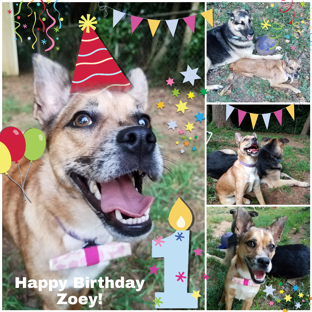 Dog Image September 24 2018 Happy 1st Birthday