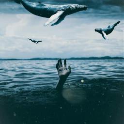 freetoedit sureal whale