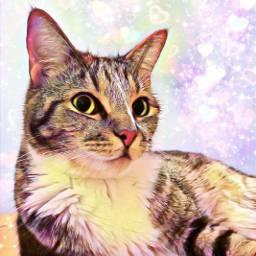 mypet petsandanimals stripes love cat